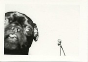 Striking Black and White Portraits of Man's Best Friend - Flavorwire | Food for Pets | Scoop.it