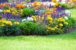 Landscape work is offered by Antonio Ochoa Landscaping in Escondido CA   Antonio Ochoa Landscaping   Scoop.it