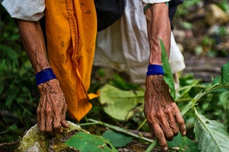 In Peru's Amazon, cash to indigenous communities aims to protect forests   Rainforest EXPLORER:  News & Notes   Scoop.it