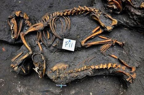 One-of-a-Kind Aztec Dog Burials Found in Mexico | Ancient Burial Traditions | Scoop.it