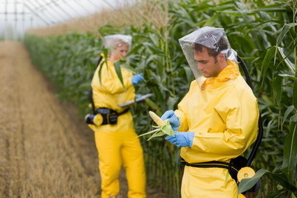 New Technology can Detect GMO Contamination in Food and Crops ... | Vertical Farm - Food Factory | Scoop.it