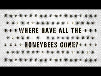 The case of the vanishing honeybees - TED-Ed | K-6 Science Resources | Scoop.it