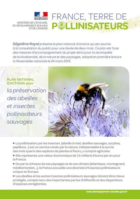 France, terre de pollinisateurs | Insect Archive | Scoop.it