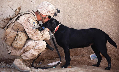 Soldiers And Service Dogs: A Heartwarming Friendship Between American Heroes | History of social behavior and nonverbal communication | Scoop.it