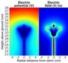 Bees learn the electric buzz of flowers | Science News | CALS in the News | Scoop.it