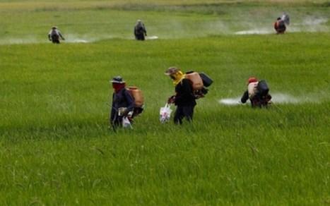 Vers un retour à une agro-écologie en Afrique | Questions de développement ... | Scoop.it