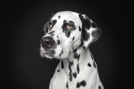 Portraits of Dogs With Human-Like Expressions | Dogs | Scoop.it