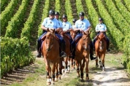 Cambriolage : 380 bouteilles d'Yquem s'envolent | IntotheWine.fr | Wine, Life & Geek - entre Bordeaux & Toulouse | Scoop.it
