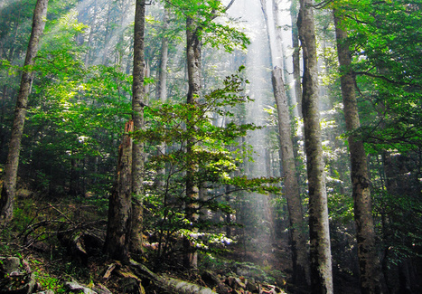 Study reveals effect of habitat fragmentation on forest carbon cycle | forestry | Scoop.it