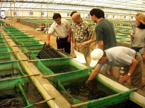 Milestone Looms for Farm-Raised Fish | Aquaculture | Scoop.it