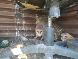 Momma protecting her babies in the deer blind. Just something different for r/hunting. • /r/Hunting | Nova Scotia Hunting | Scoop.it