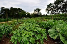 FairShare Welcomes Six Newly Endorsed Farms : FairShare CSA Coalition   Vertical Farm - Food Factory   Scoop.it