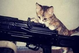 Cats and Kalashnikovs: Behind the ISIS social media strategy - Sydney Morning Herald | Corporate Social Business | Scoop.it