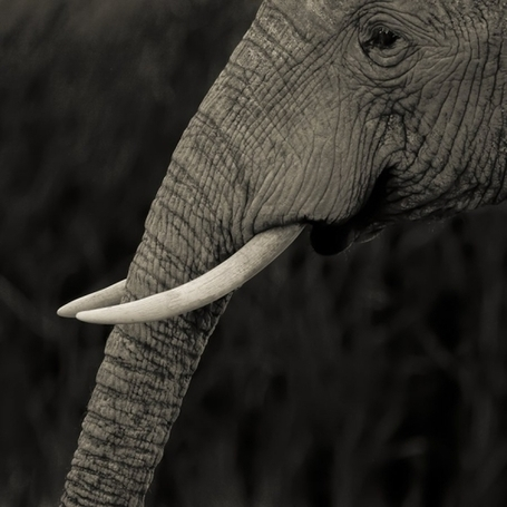 In Search Of The Perfect Moment in Africa | Amazing Rare Photographs | Scoop.it