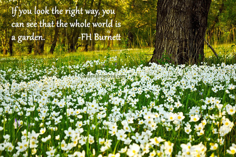 Quote by F.H. Burnett | The Muse | Scoop.it