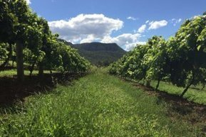 Pre-election plea from Hunter vignerons and horse breeders for extended buffer zones | Viticulture | Scoop.it