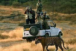 Ranthambore National Park Tiger Safari Package Booking   Safaris in India & Africa   Scoop.it
