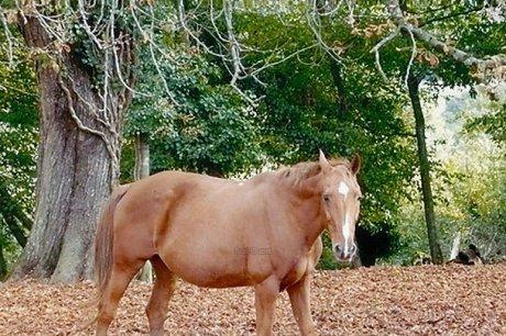 SOS chevaux en détresse - SudOuest.fr | Trotting club | Scoop.it