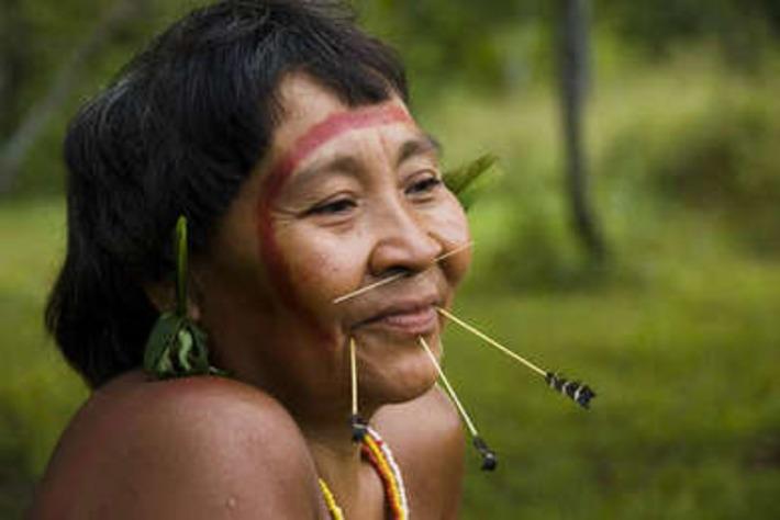 2013 : une année de succès pour les peuples indigènes | Survival International | Kiosque du monde : Amériques | Scoop.it