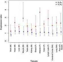 Adam's rib, revisited: Evolutionary divergence of mammalian sex chromosomes   Aux origines   Scoop.it