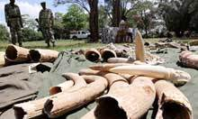 Why hasn't the ivory industry been wiped out? | Wildlife and Environmental Conservation | Scoop.it