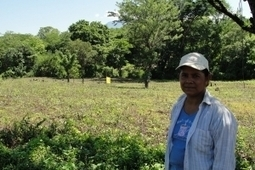 In Central America, Smallholder Farmers Get Plugged In To Markets | Food Security & Sustainability | Scoop.it