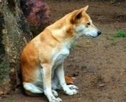 Service dog memorial dedication ceremony held at Foothills Animal Shelter - Examiner.com | Animal Rescue Web Digest | Scoop.it