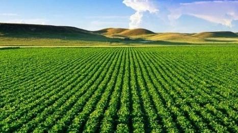 Plan Maroc Vert : prêt de la France de 60 millions d'euros - Le360.ma | Agriculture et Alimentation méditerranéenne durable | Scoop.it