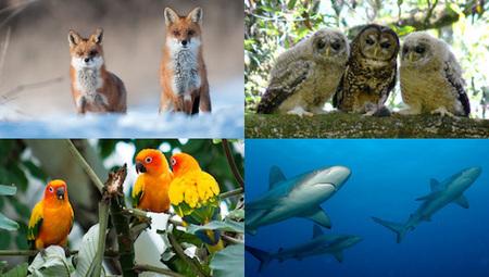 99 strange collective animal names | Chummaa...therinjuppome! | Scoop.it