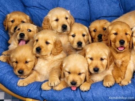 Tiết kiệm chi phí cho thú cưng - Thức ăn cho thú cưng | nanapet | Scoop.it