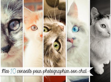 Mes 10 conseils pour photographier son chat | D'ICI & D'AILLEURS Photography | Photographie | Scoop.it