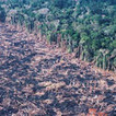 ALERT! Brazilian Forest Code Revisions Threaten Amazon Rainforest | Deforestation In The Amazon Rainforest | Scoop.it