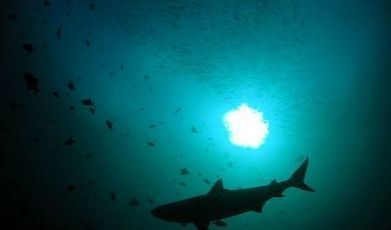 50 pays se sont réunis pour renforcer la protection des requins | Protection des Océans | Scoop.it