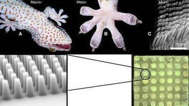 Une colle recyclable inspirée des geckos... pour l'automobile | Ressources pour la Technologie au College | Scoop.it