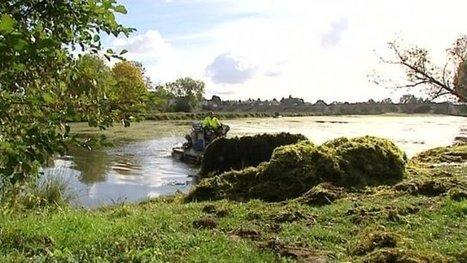 Nièvre : haro sur les algues qui envahissent un ancien bras de la Loire | Revue de presse du CAUE de la Nièvre | Scoop.it