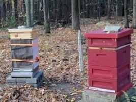 In the Beeyard: Final Winter Preparations - Homesteading and Livestock - MOTHER EARTH NEWS | Real Food and Health | Scoop.it