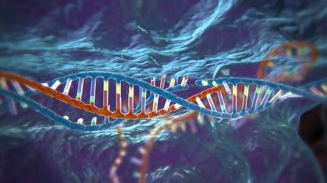 Scientists Just Removed HIV from Human Immune Cells Using CRISPR Gene-Editing | Futurewaves | Scoop.it