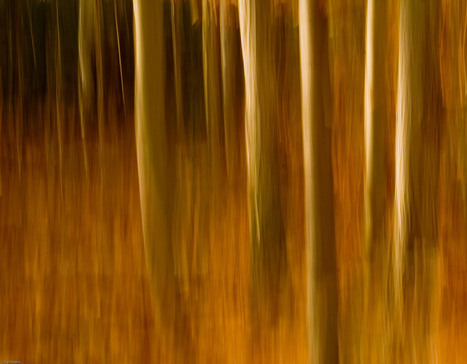 Tree Blurs - How to do them. Great for Fall | Impressionist camera | Scoop.it