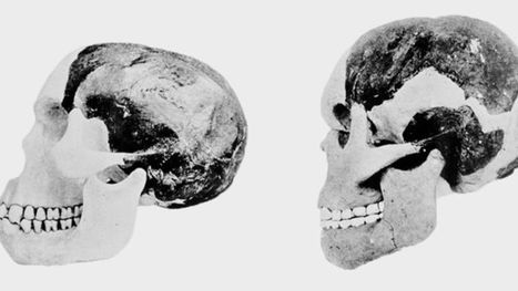 Piltdown Man Hoax Was the Work of a Single Forger, Study Says   News we like   Scoop.it