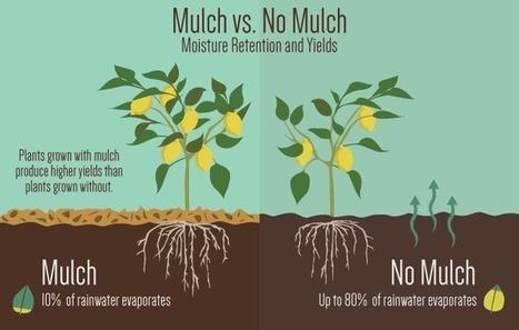 The Benefits of Gardening with Mulch | Fix.com | Balcony Gardening | Scoop.it