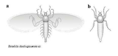 La découverte d'insectes fossiles en Chine lève le voile sur une énigme paléontologique   EntomoNews   Scoop.it