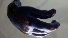 La main de Rodin a été vendue 20 000 euros aux enchères à Rouen | La revue de presse de Normandie-actu | Scoop.it