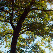 TD Bank Group announces new support for North American forests   Timberland Investment   Scoop.it