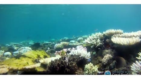 Australie : le blanchissement de la Grande Barrière de corail inquiète des scientifiques | Biodiversité | Scoop.it