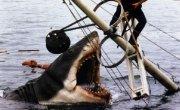Is Steven Spielberg Planning a 'Jaws' Reboot? | Movies! Movies! Movies! | Scoop.it