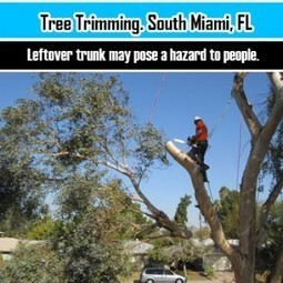 South Miami, FL Arborists Share The Importance Of Regular Tree Trimming | Home Improvement | Scoop.it