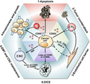 The role of CD95 and CD95 ligand in cancer - Nature.com | Host Cell & Pathogen Interactions | Scoop.it