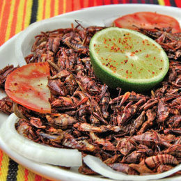 Insects: They're what's (not) for dinner | Entomophagy: Edible Insects and the Future of Food | Scoop.it