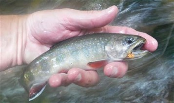 Trout fishing events, workshops - Pittsburgh Post Gazette | Aquafeed International | Scoop.it