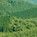 Masisa Sells Forestland to Hancock for $203 Million   Timberland Investment   Scoop.it